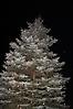 Weihnachtsbaumaufstellen 2017_2