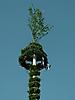 Maibaum aufstellen 2009_87