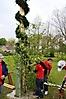 Maibaum aufstellen 2010_69