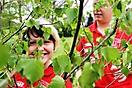 Maibaum aufstellen 2010_70