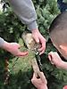 Maibaum aufstellen 2013_10
