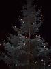Weihnachtsbaum aufstellen 2008_21