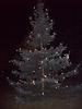Weihnachtsbaum aufstellen 2008_41