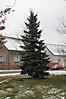 Weihnachtsbaum aufstellen 2010_22
