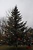Weihnachtsbaum aufstellen 2011_13