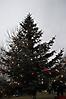Weihnachtsbaum aufstellen 2011_14