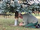 Weihnachtsbaum aufstellen 2011_24
