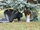 Weihnachtsbaum aufstellen 2011_26