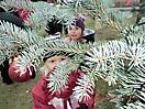 Weihnachtsbaum aufstellen 2011_38
