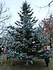 Weihnachtsbaum aufstellen 2011_39