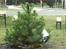 Weihnachtsbaum verbrennen 2009_2