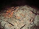 Weihnachtsbaum verbrennen 2009_58