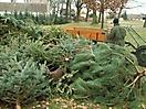 Weihnachtsbaum verbrennen 2009_5