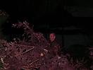 Weihnachtsbaum verbrennen 2010_28